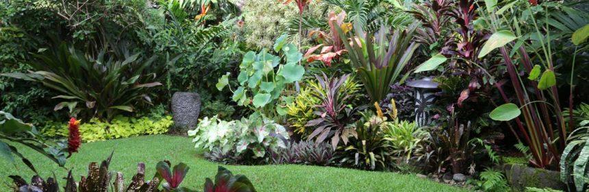como hacer un jardín tropical