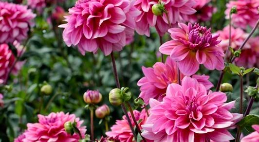 Las flores son la parte llamativa y reproductiva de -las-plantas-