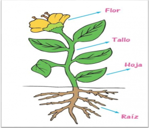 plantas del mundo