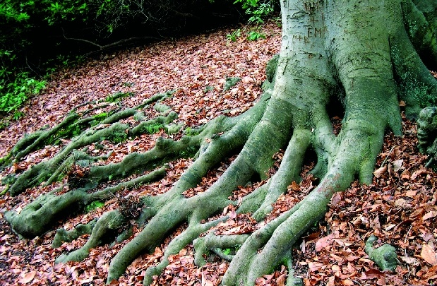 La-planta-obtiene sus nutrientes de la raiz