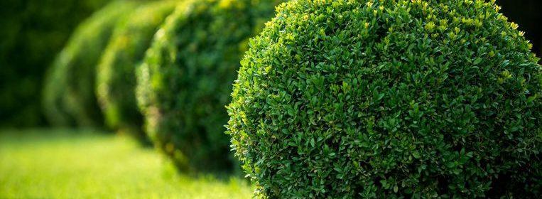 plantas herbaceas