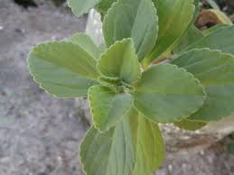 planta de acetaminofén