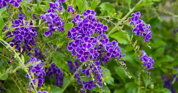 planta-para-jardín-exterior