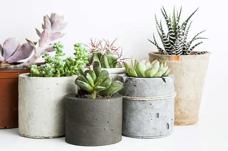 plantas-decorativas