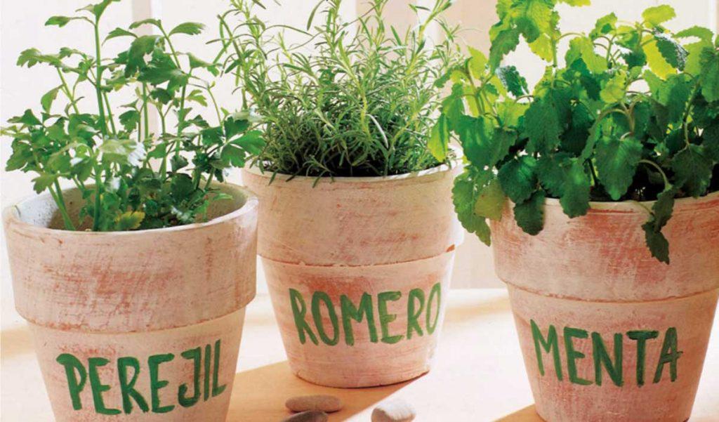 plantas para jardín en macetas