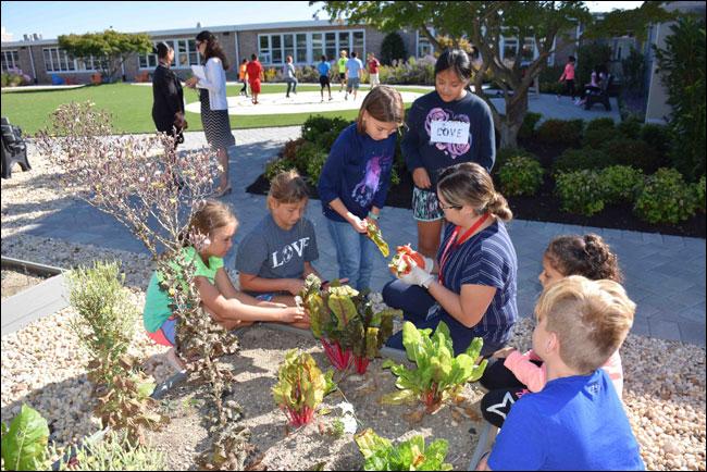 ¿Cuáles son los beneficios de tener un huerto escolar?