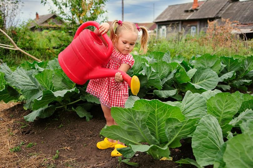 ¿Qué se puede cultivar en un huerto escolar?