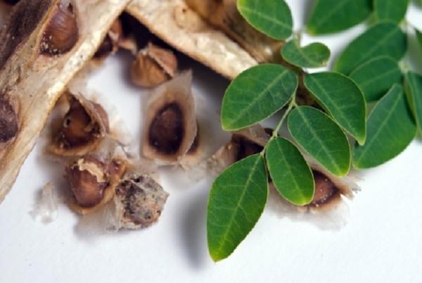 ¿Para qué sirve la semilla de moringa?