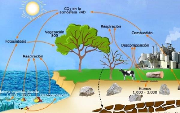 El ciclo de oxigeno