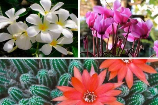 Como es la estructura y morfología de las flores