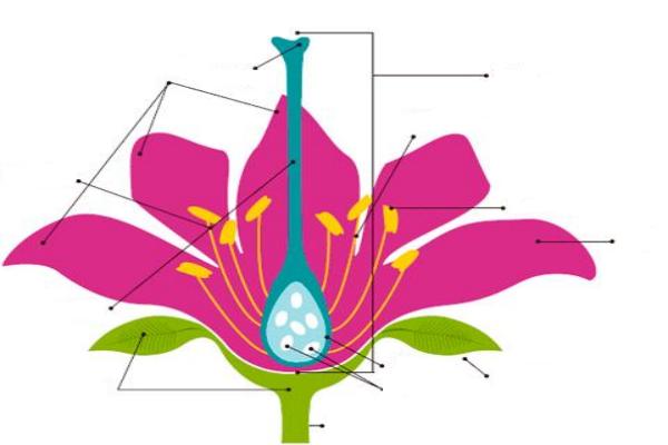 Estructuras de las flores